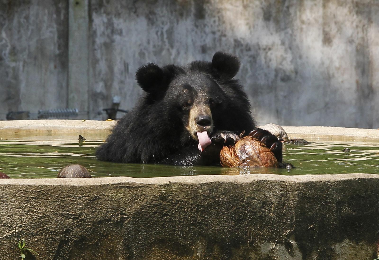 Bear India