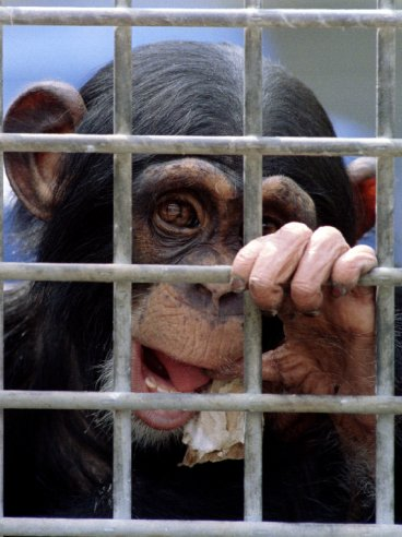 Animal experiment