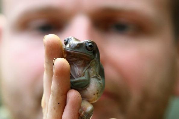 reptile exotic pet