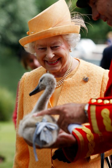 Queen Elizabeth II is shown orphaned cygnet
