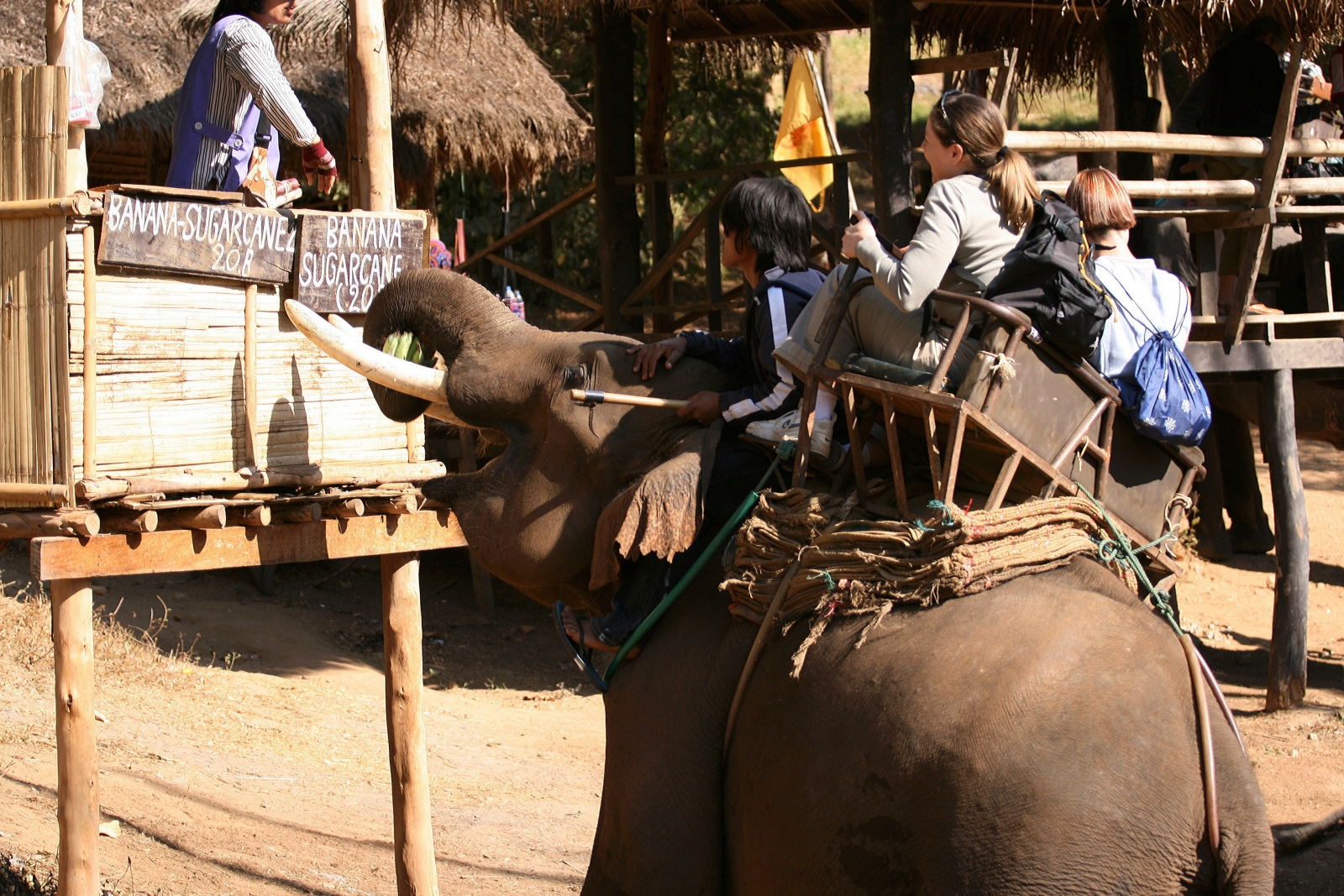 An elephant carrying tourists