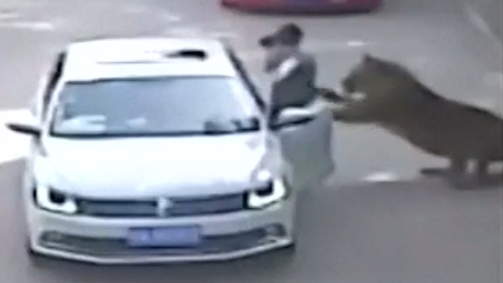 Tiger mauls woman to death