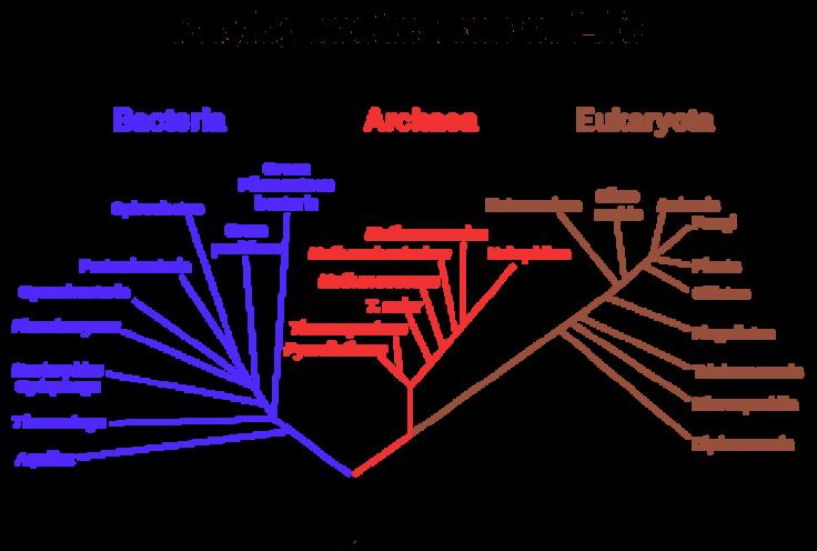 last universal common ancestor