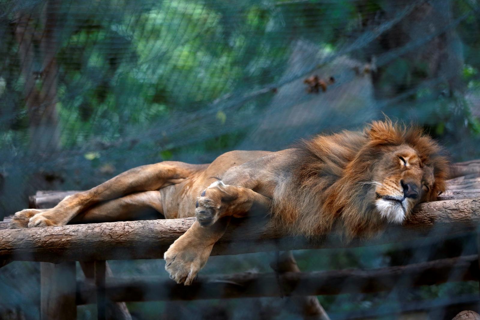 animals venezuela food zoo die zoos died eat several crisis killing sad them because