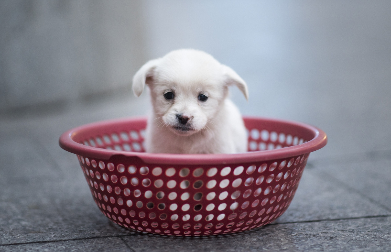 Pet shops banned from selling puppies across England