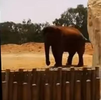 Rabat Zoo