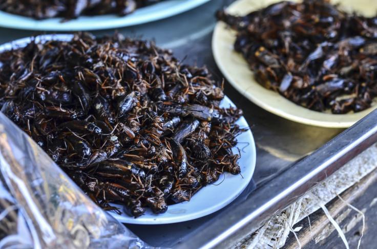 cockroach milk superfood