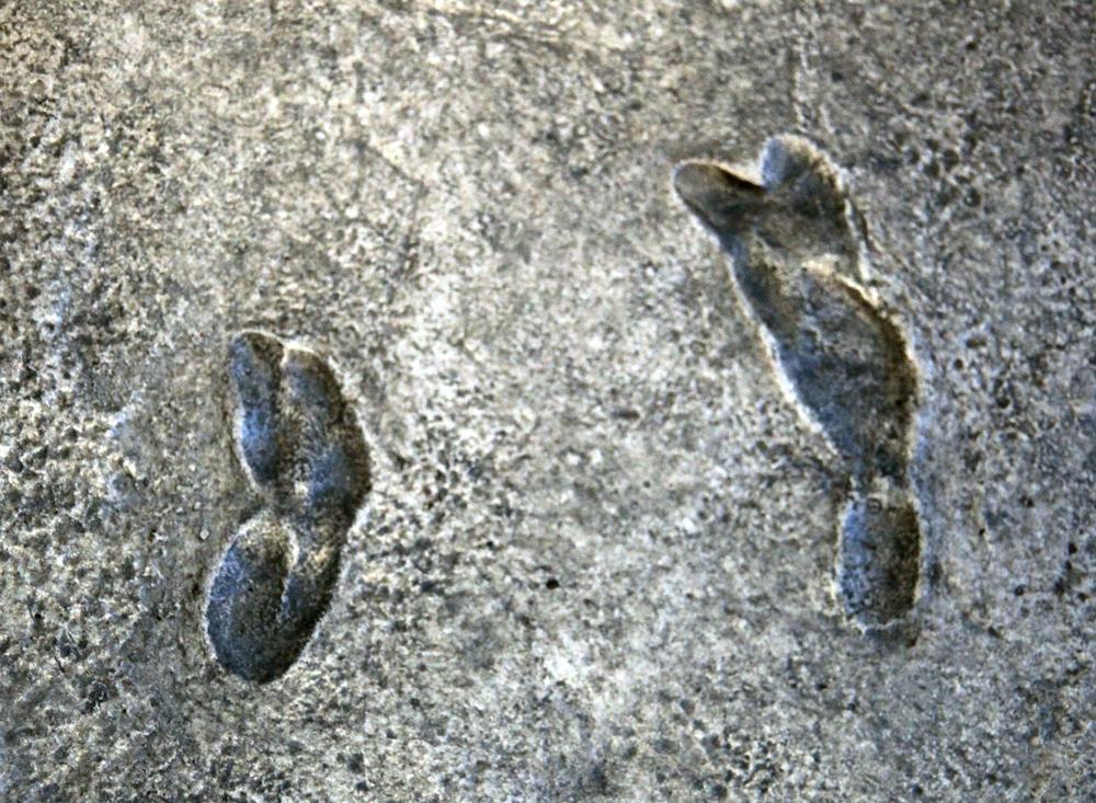 Laetolit footprints gait