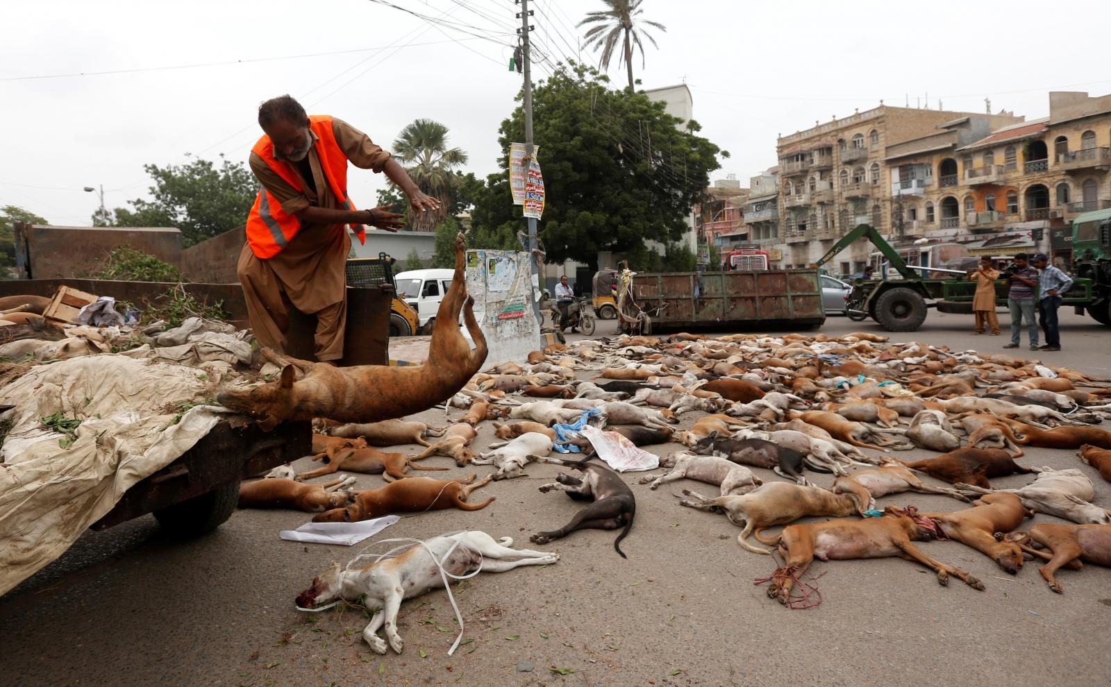 Pakistan Karachi dog culling