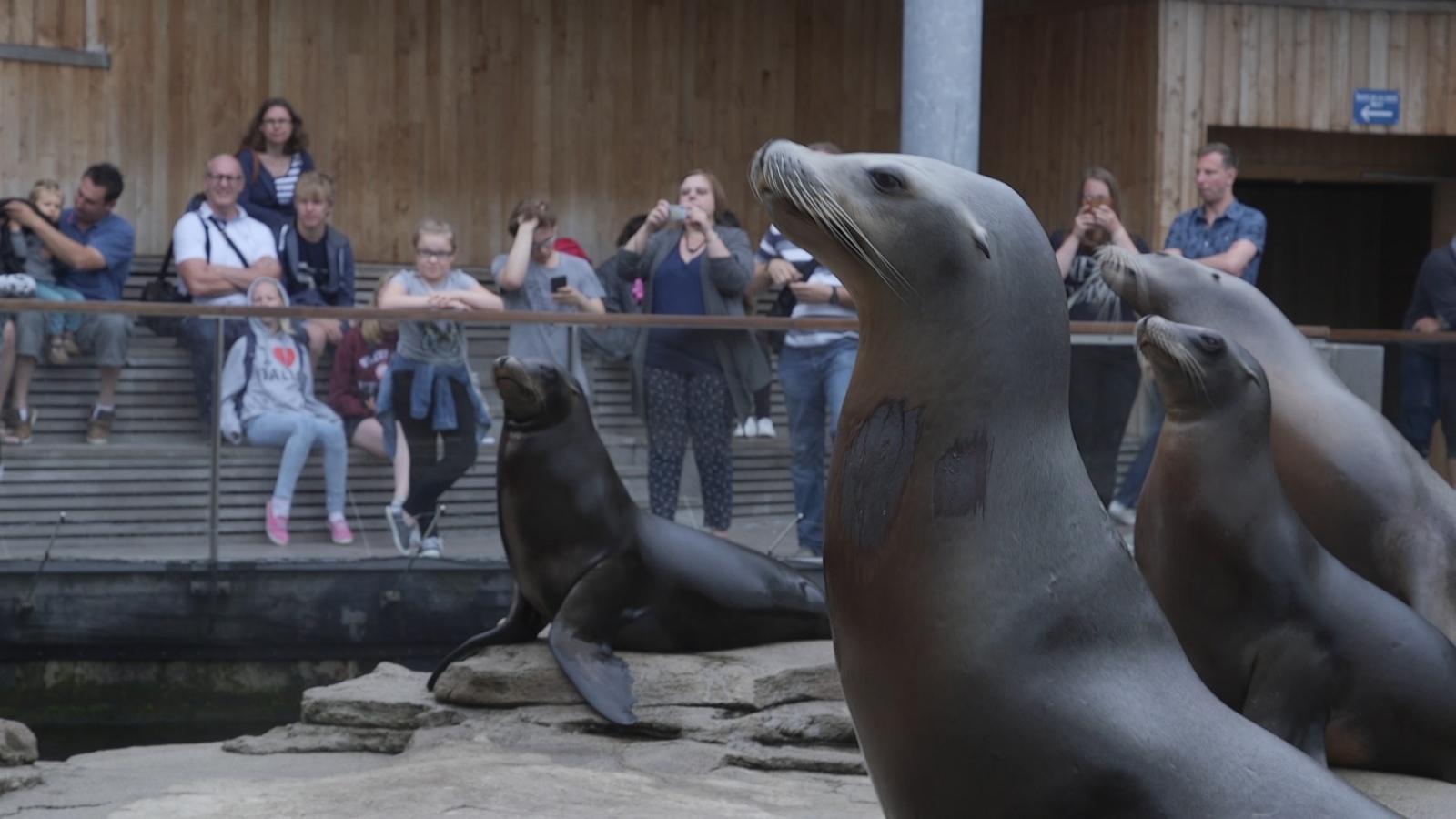nausicaa sea lions
