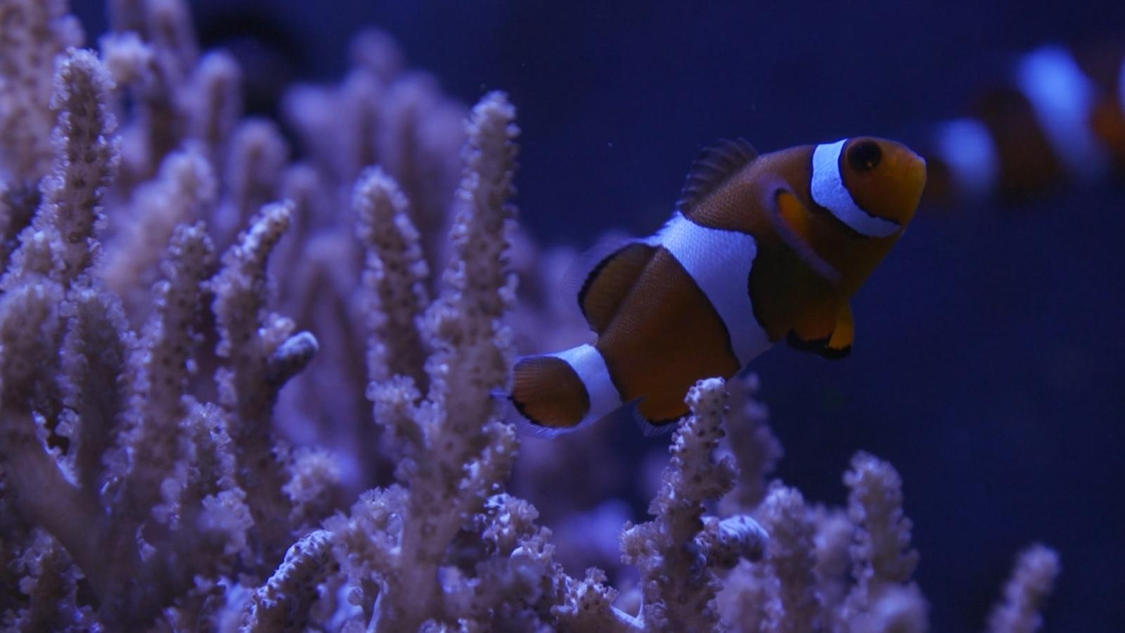 nausicaa aquarium france