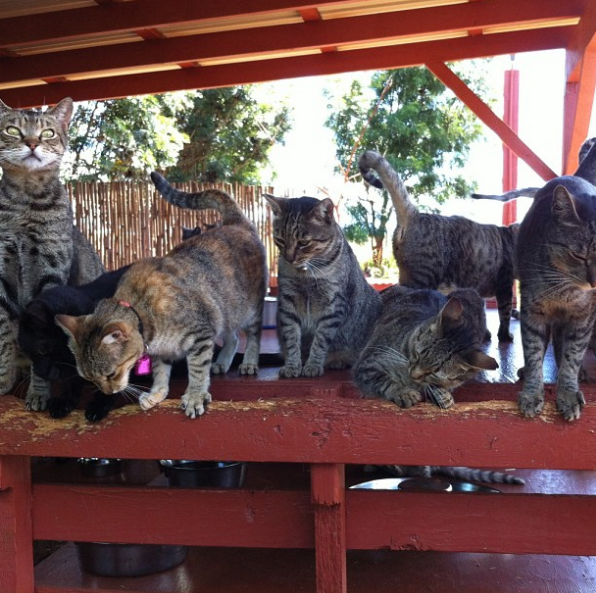 international cat day - photo #17