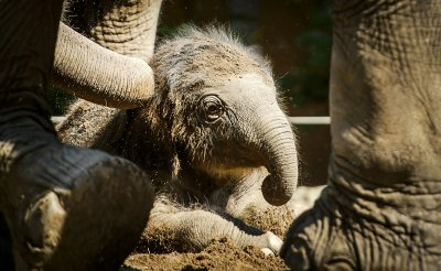 Newborn elephant pictured at Rotterdam zoo