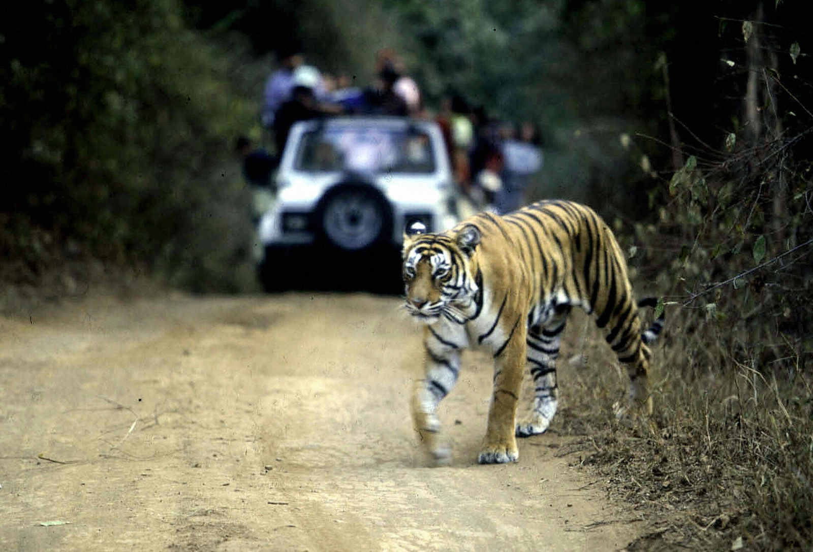 Once upon a time, a tiger called Machli ruled Ranthambore