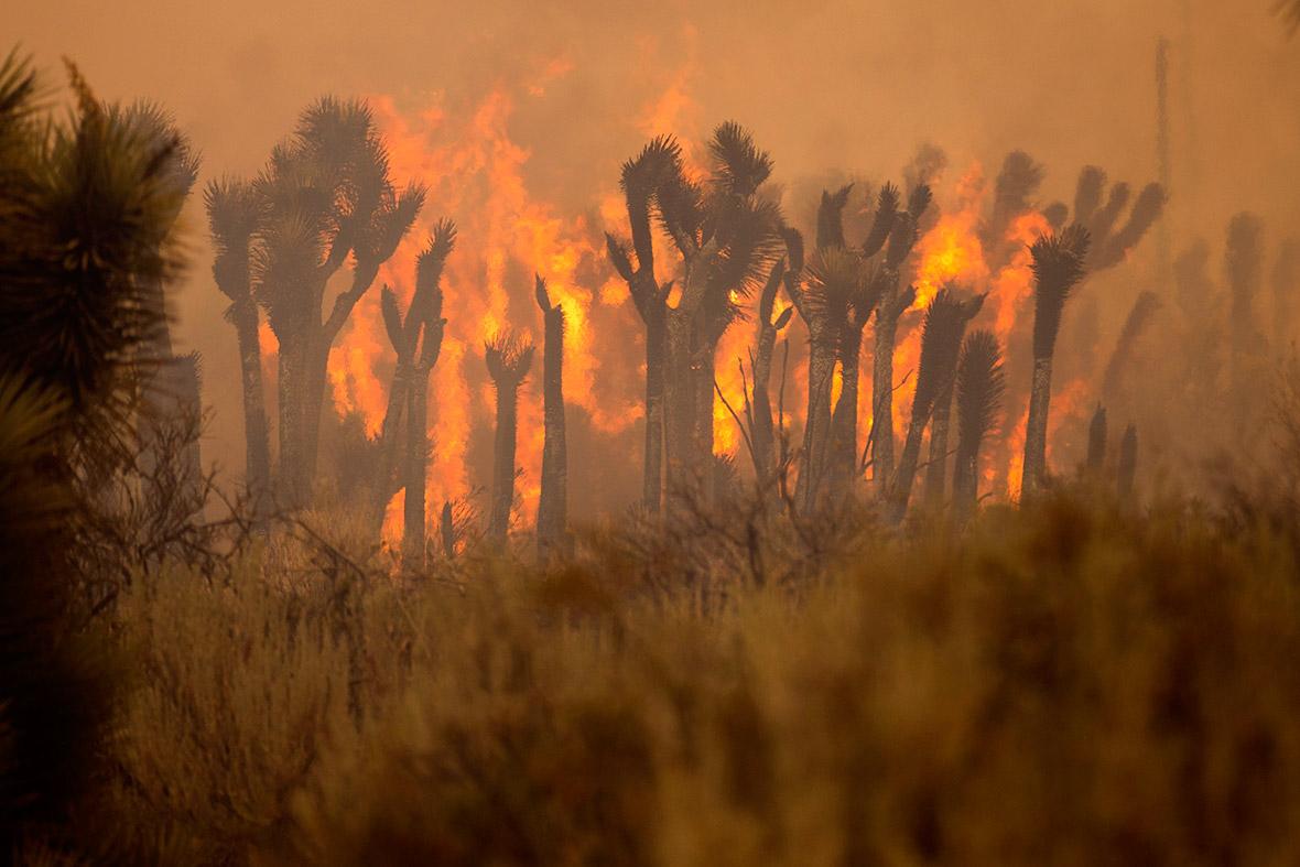 California fire wildfires bluecut