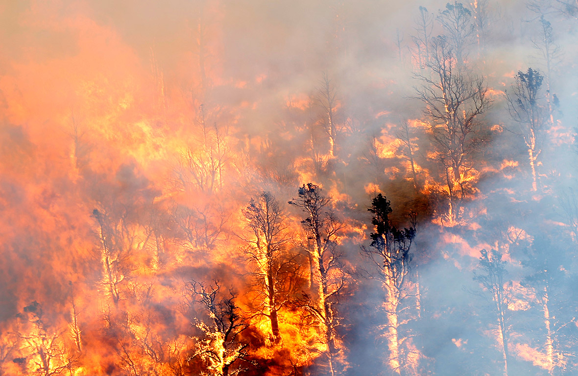 California Wildfire Blue Cut Fire Rages Uncontrolled East Of Los Angeles
