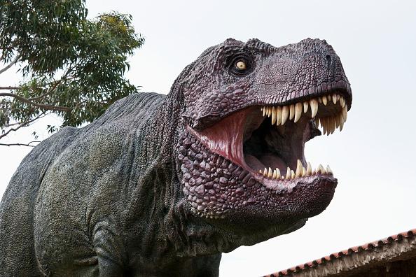 Australia's 'Jurassic Park' turns up some of the world's largest dinosaur tracks