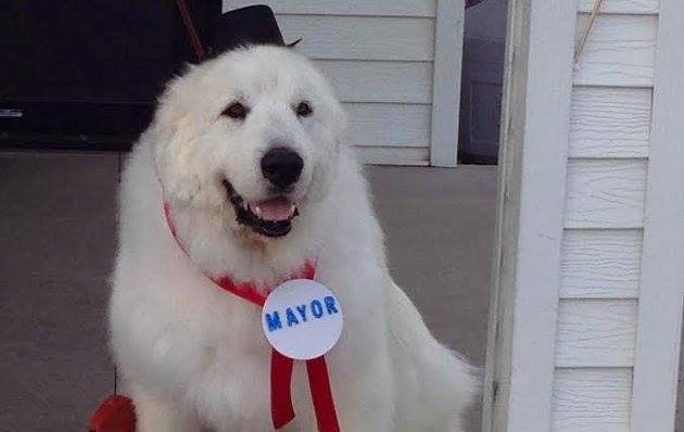 Duke the dog mayor of Cormorant