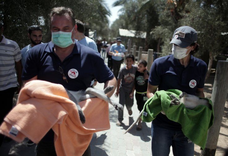 Monkeys carried out of Gaza zoo