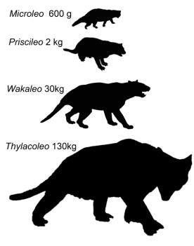 marsupial lion