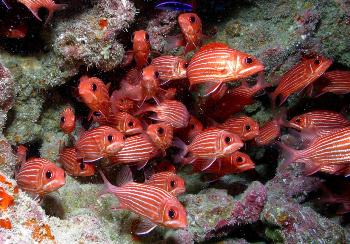 Papahānaumokuākea squirrelfish