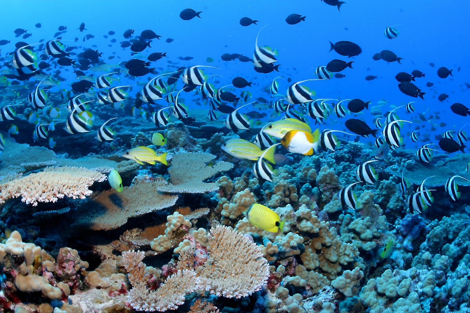 Papahānaumokuākea reef fish