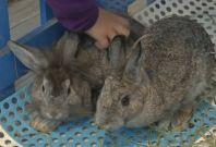 Hong Kong opens first rabbit cafe
