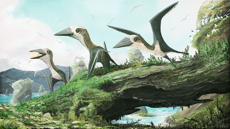 Small-bodied pterosaurs