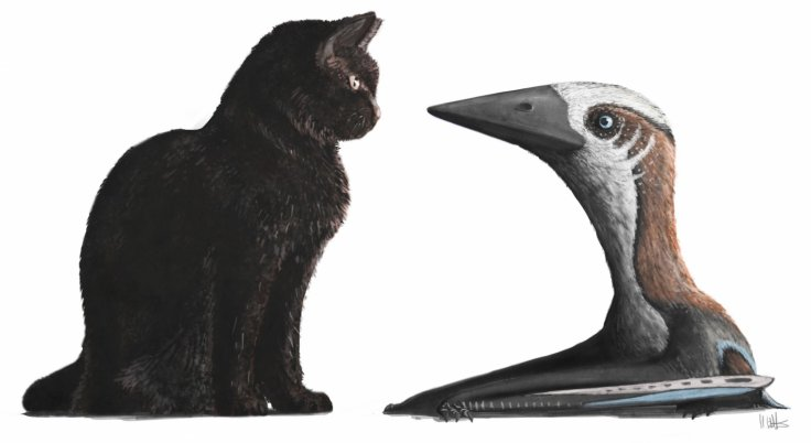 Pterosaur-cat comparison
