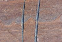 world\'s oldest fossils