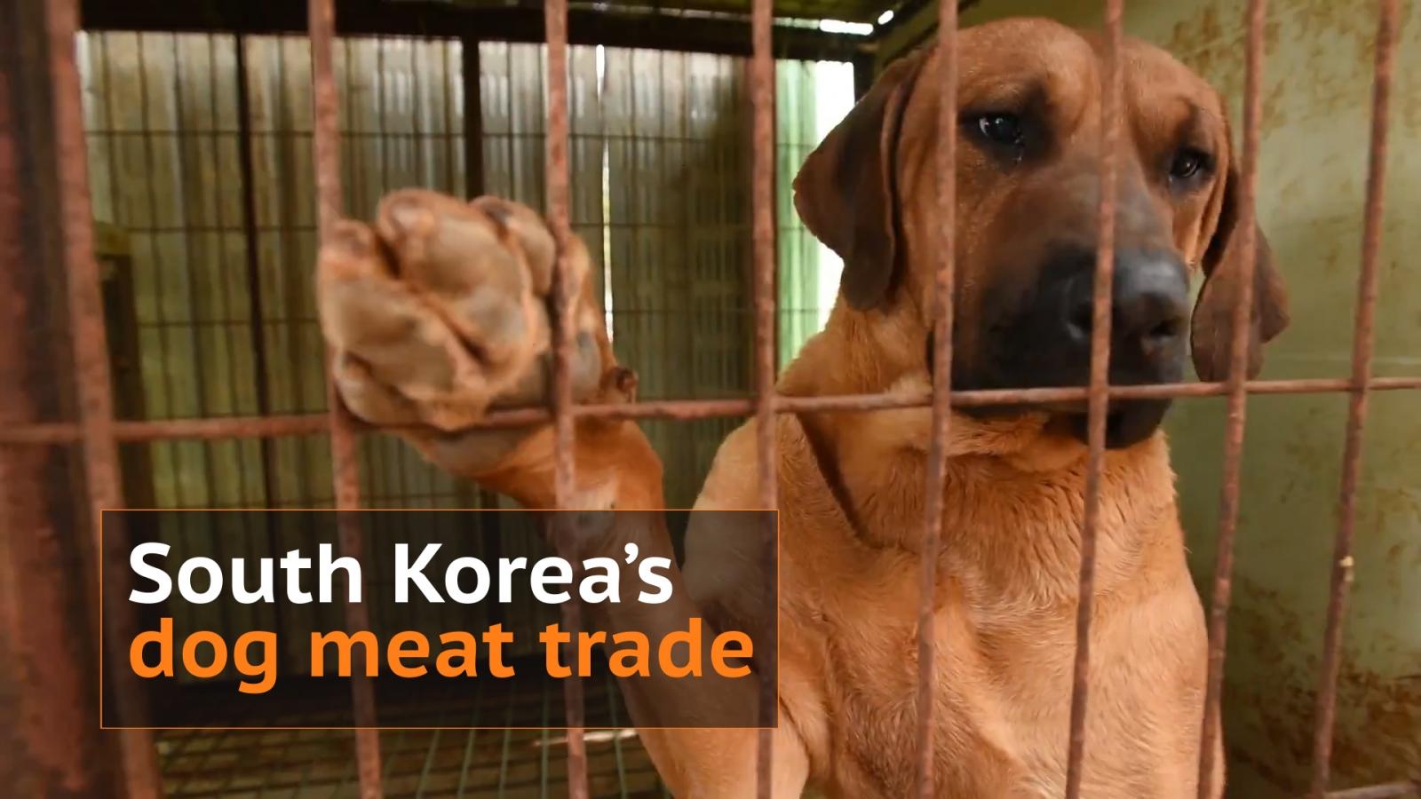 South Korea's dog meat trade