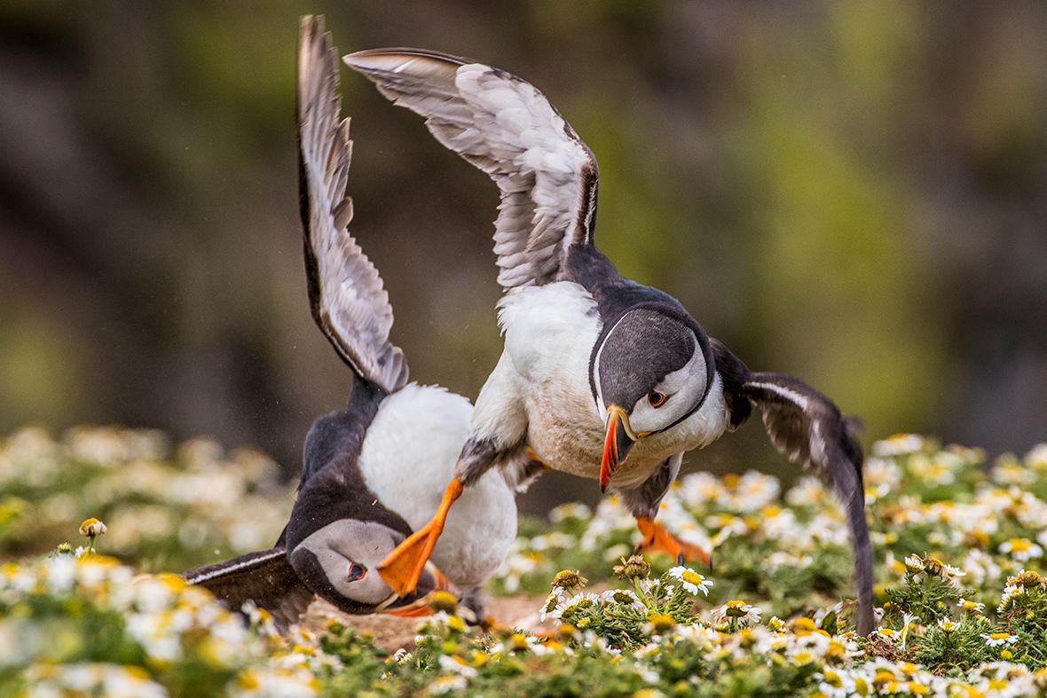 Best Wildlife Photos 2016 32