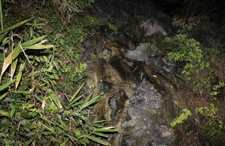 Limestone hillstream