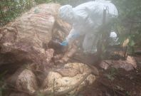 anthrax elephant africa