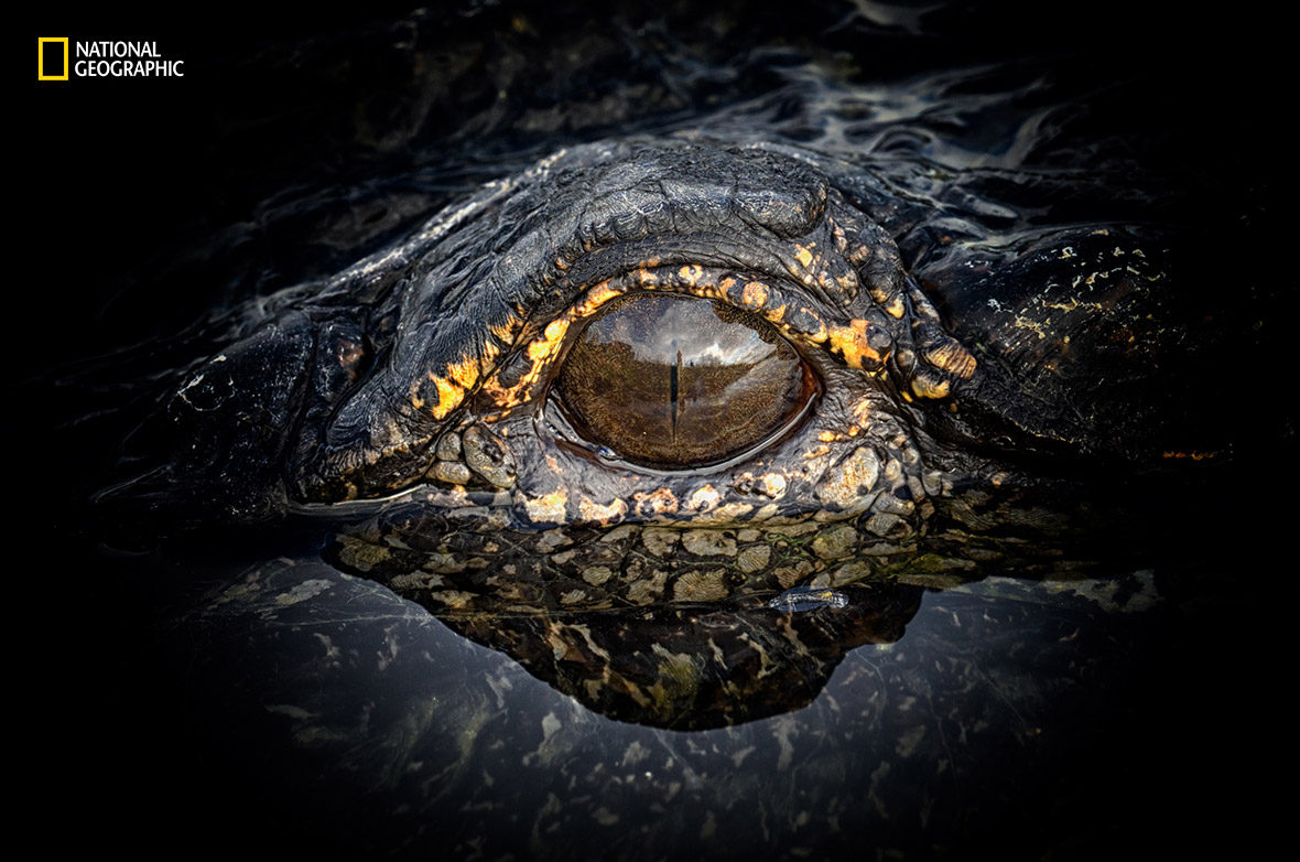2016 National Geographic Nature Photographer of the Year