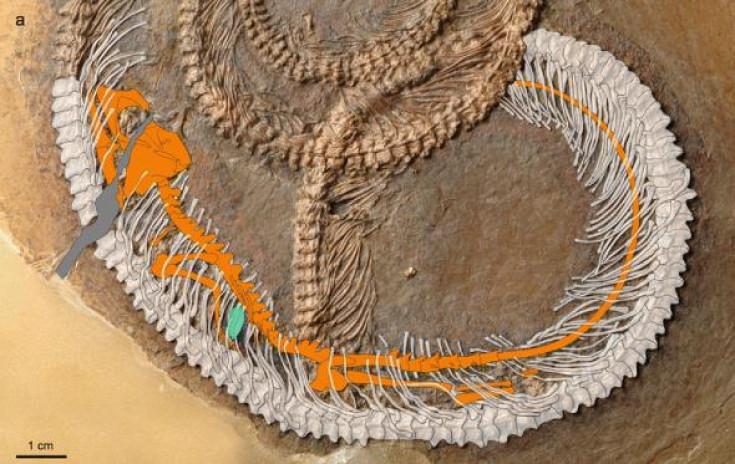 snake lizard bug fossil