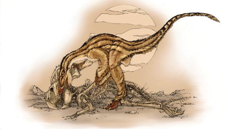 Velociraptor vs Protoceratops