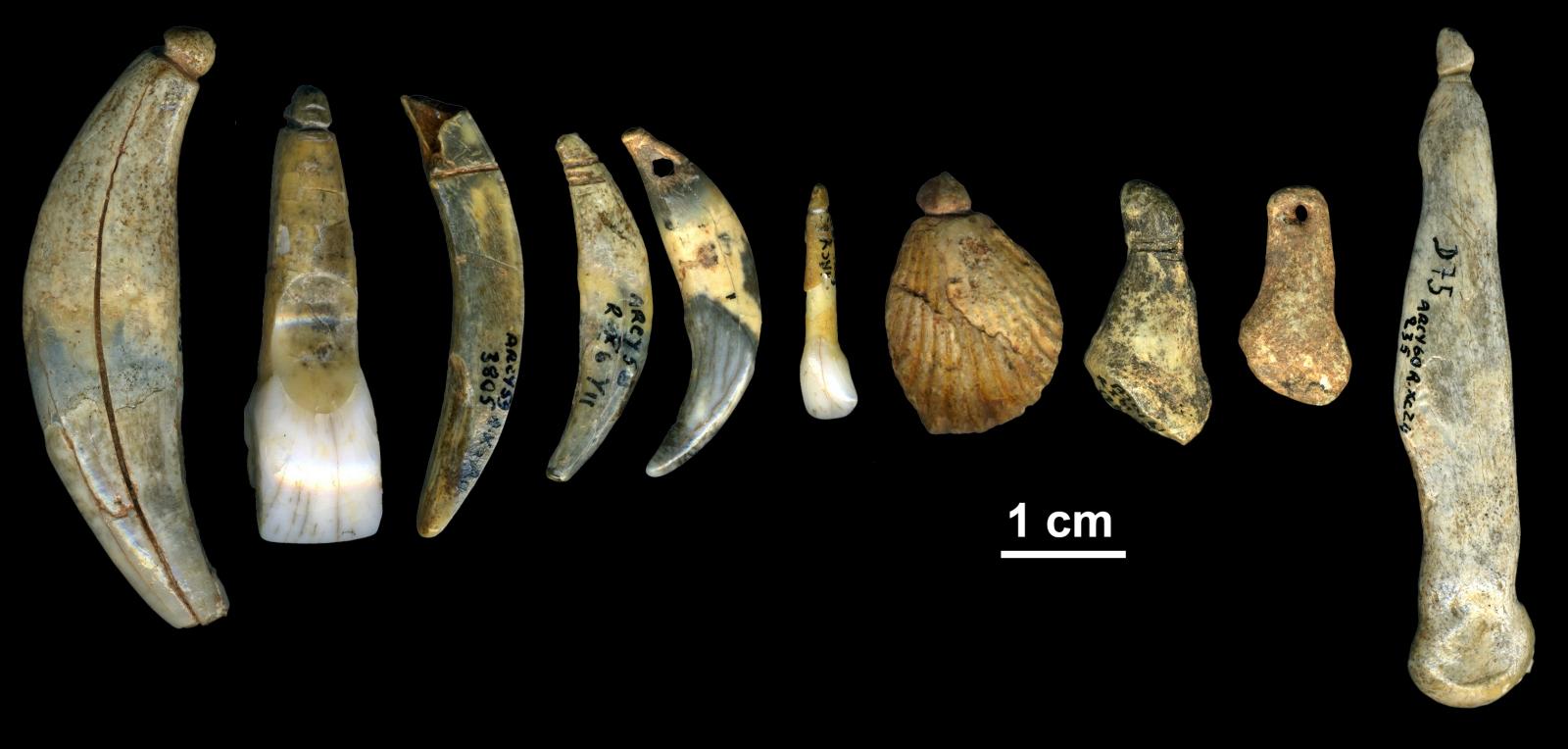 Châtelperronian neanderthals