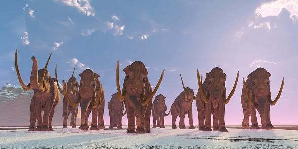 herd of columbian mammoths