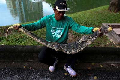 Monitor lizards lumpini park Bangkok