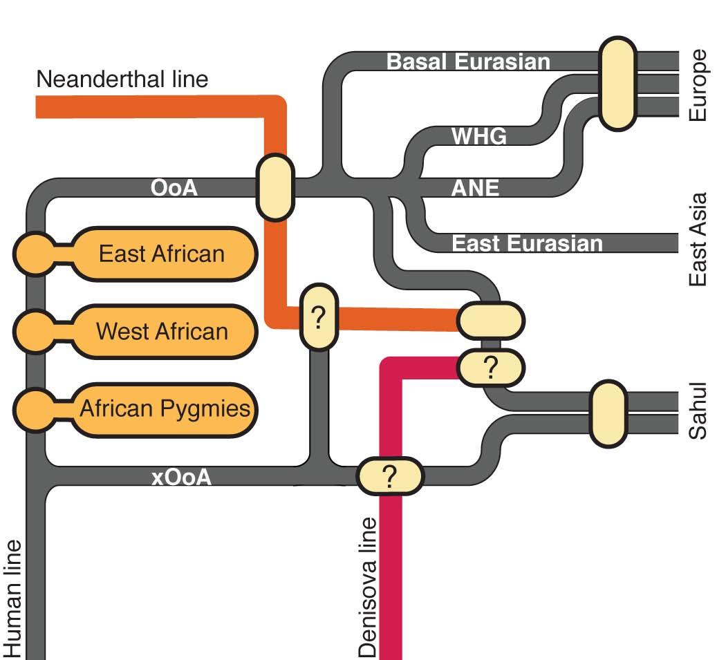 ancient dna humans