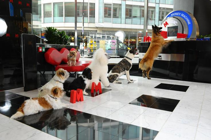 Metro Bank dogs