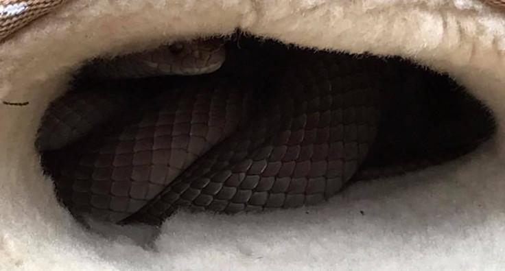 Snake still in an ugg boot