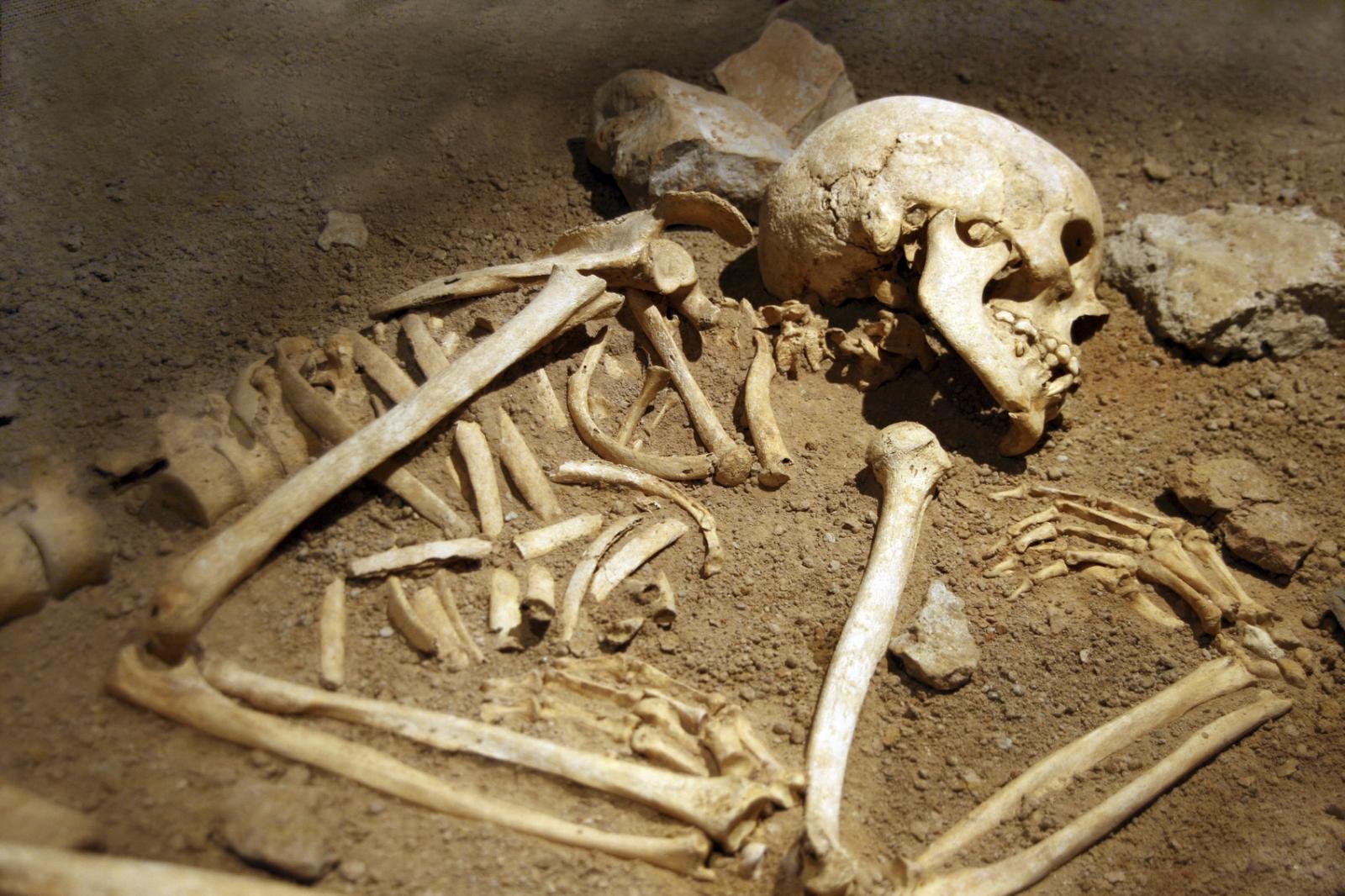 skeleton human remains