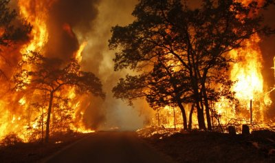 Flames engulf a road near Bastrop State Park as a wildfire burns out of control near Bastrop