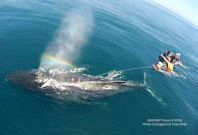 Whale entanglement