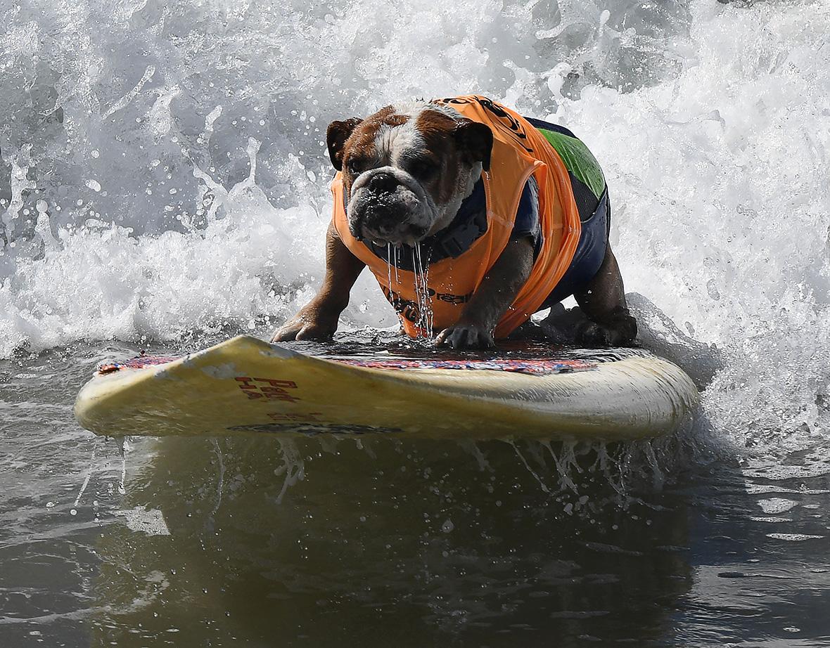 Huntington Beach Surf Dogs