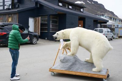 Polar bears Svalbard Norway