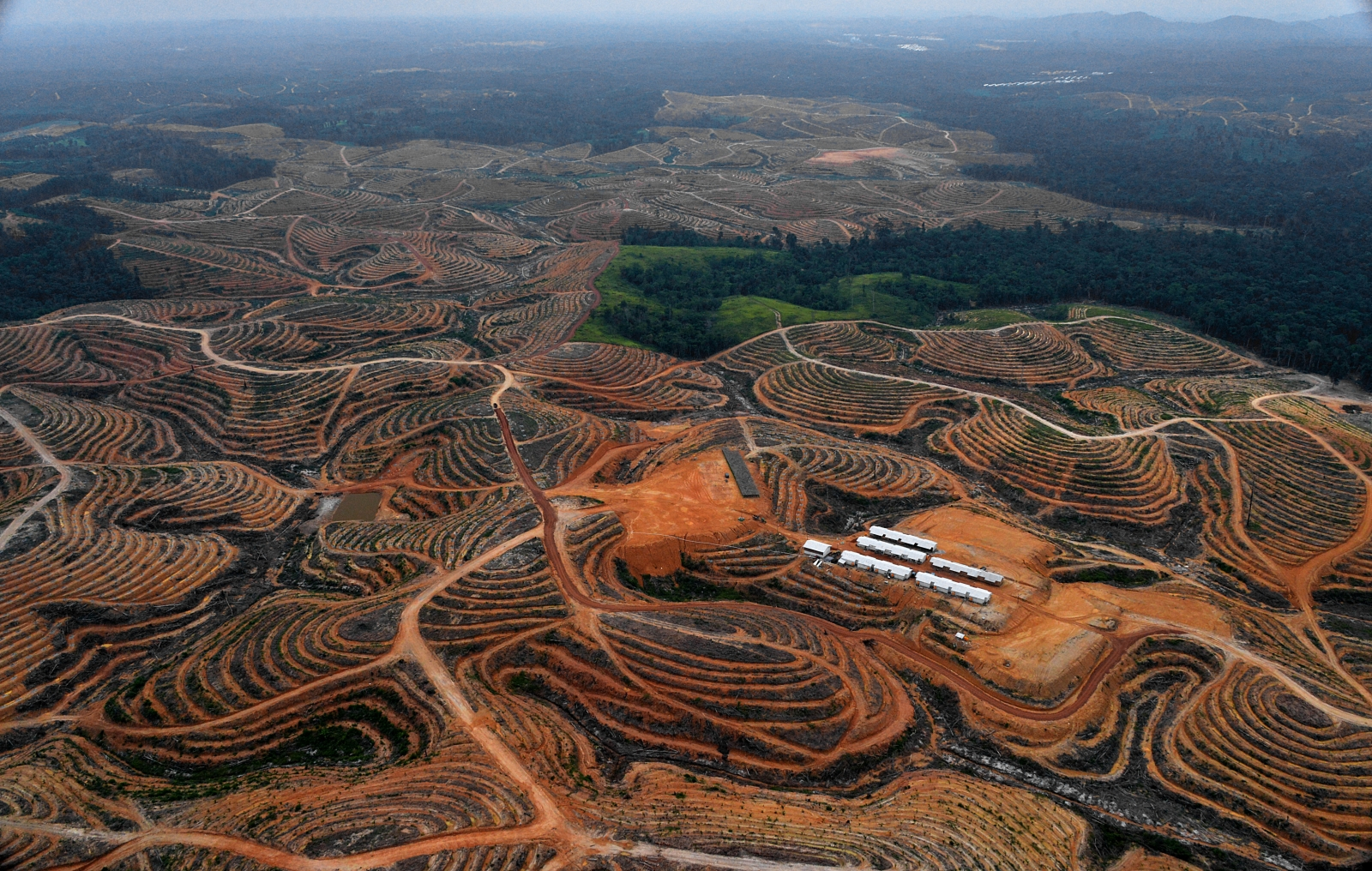 borneo deforestation palm oil