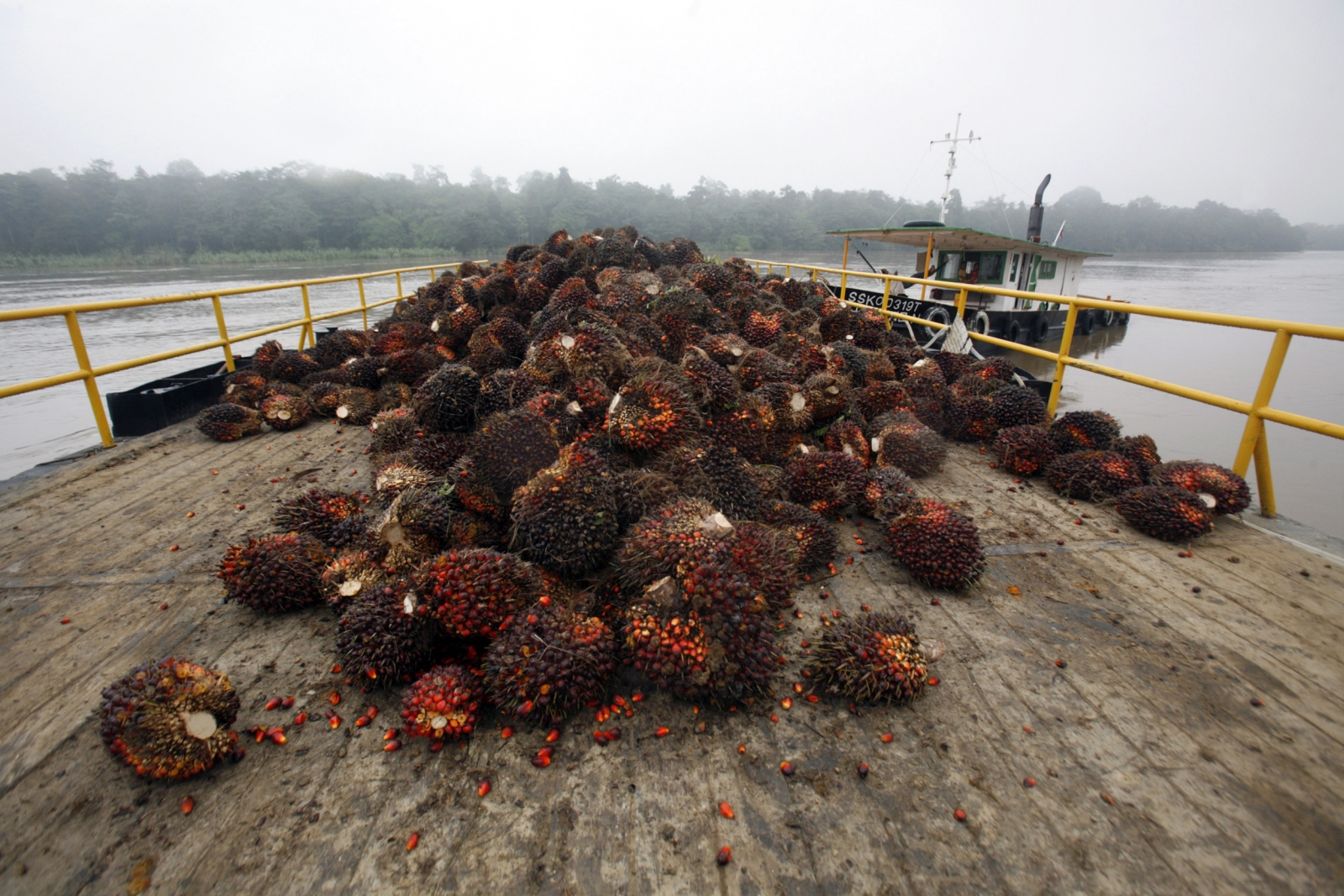 borneo deforestation palm oil